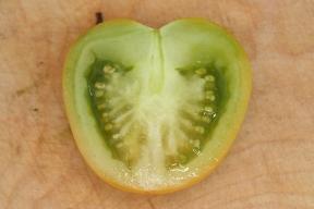 Reife Früchte der Grünen Traube