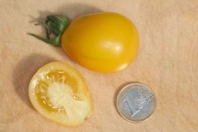 Yellow Submarine - Frucht - Tomate im Längsschnitt