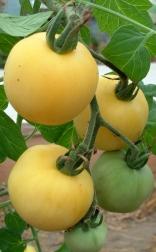Weißer Pfirsich - Frucht - Tomate
